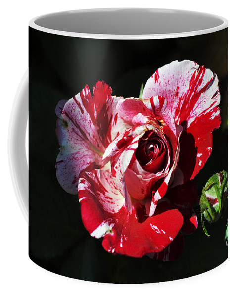 Clay Coffee Mug featuring the photograph Red Verigated Rose by Clayton Bruster
