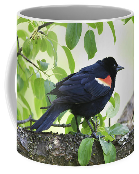 Bird Coffee Mug featuring the photograph Red Winged In Montreal by Deborah Benoit