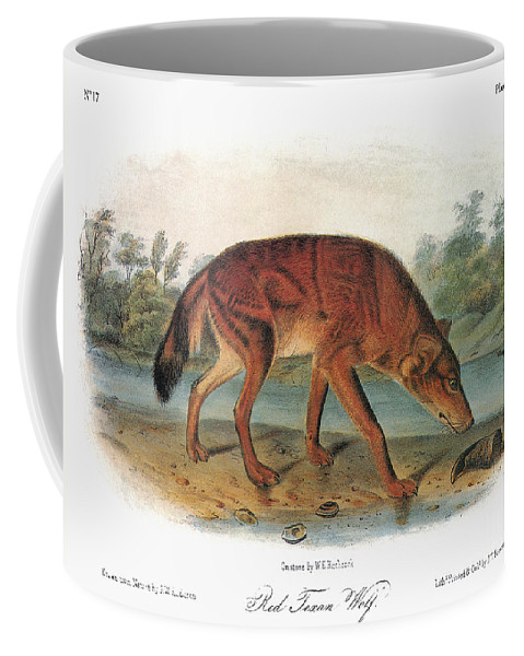 1846 Coffee Mug featuring the photograph Red Wolf (canis Lupus) by Granger