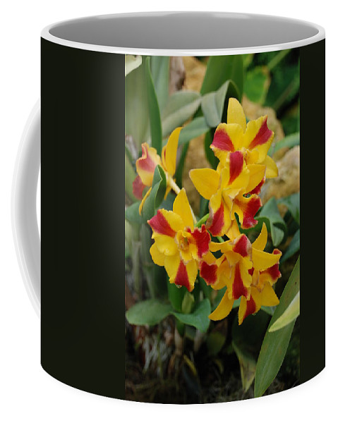 Macro Coffee Mug featuring the photograph Red Yellow Orchids by Rob Hans