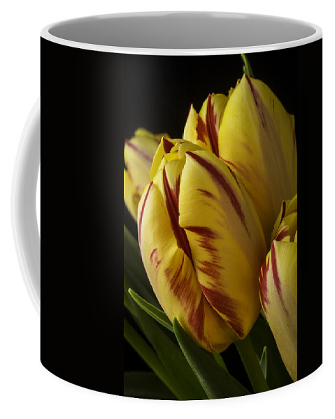 Yellow Coffee Mug featuring the photograph Red Yellow Tulip by Garry Gay