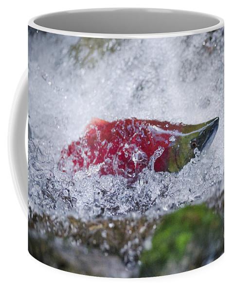 Wildlife Coffee Mug featuring the photograph Redfish by Joy McAdams