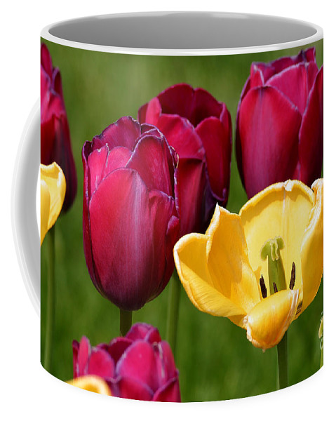 Tulip Coffee Mug featuring the photograph Redyellowtulips6722 by Gary Gingrich Galleries