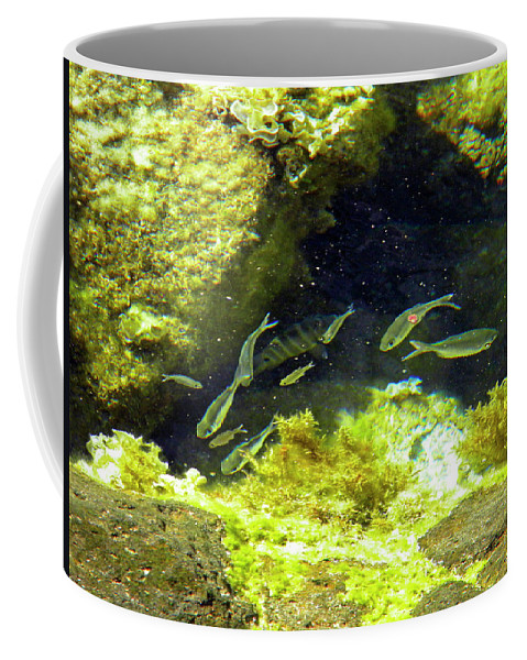 Frank Wilson Coffee Mug featuring the photograph Reef Tide Pool by Frank Wilson