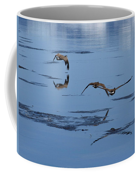 Birds Coffee Mug featuring the photograph Reflecting Geese by DeeLon Merritt