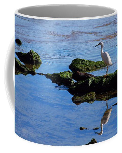 Clay Coffee Mug featuring the photograph Reflecting On Dinner by Clayton Bruster