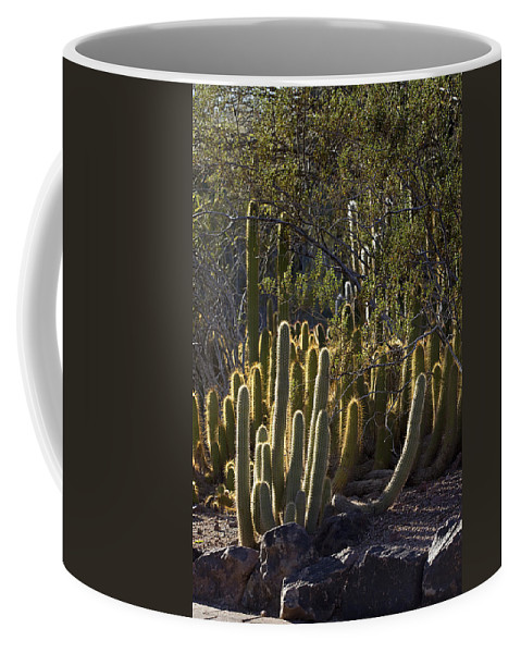 Landscape Coffee Mug featuring the photograph Reflecting The Sunshine by Phyllis Denton