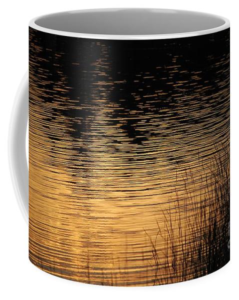 Digital Photo Coffee Mug featuring the photograph Reflection On A Sunset by David Lane