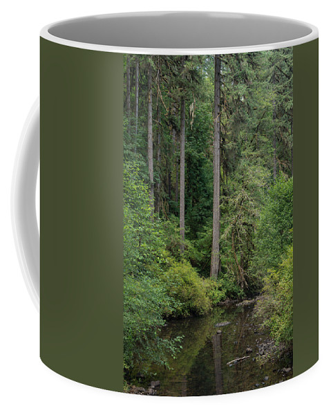 Trees Coffee Mug featuring the photograph Reflections In Silver Falls State Park by Greg Nyquist