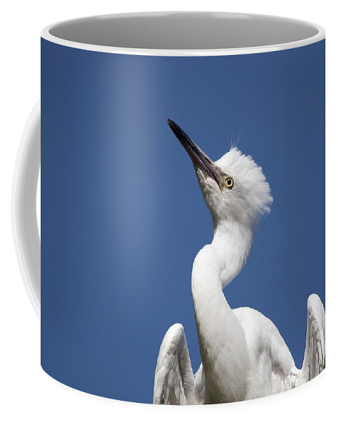 Birds Coffee Mug featuring the photograph Regal Snowy Egret by Kenneth Albin