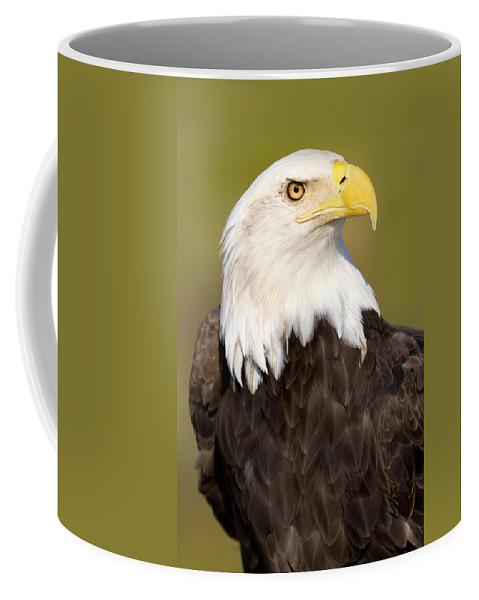 Bald Eagle Coffee Mug featuring the photograph Regale by Janet Fikar