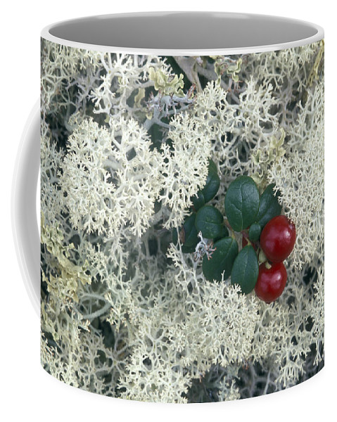 Closeups Coffee Mug featuring the photograph Reindeer Lichen And Low-bush Cranberry by Rich Reid