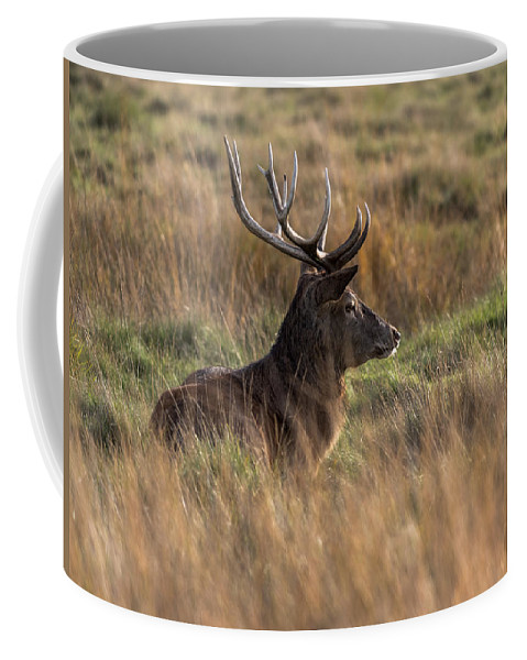 Richmond Coffee Mug featuring the photograph Relaxing Deer by Matt Malloy