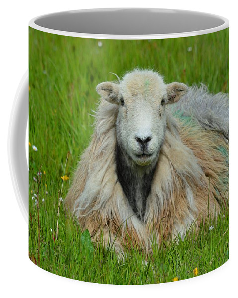 Field Coffee Mug featuring the photograph Relaxing In The Pasture by Graham Harding