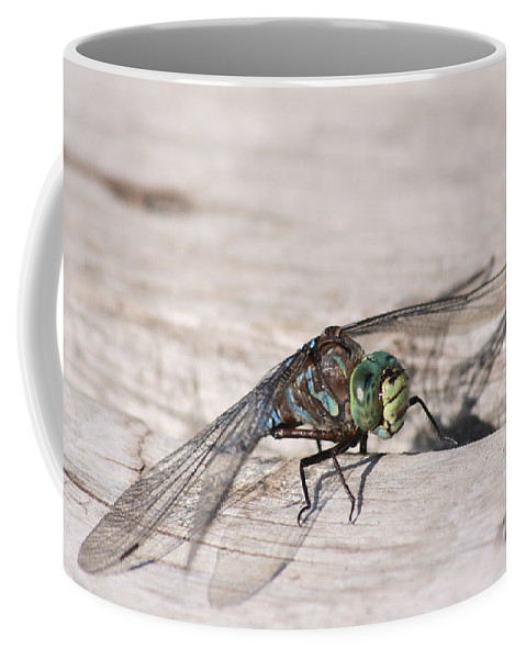 Dragonfly Nature Bug Flying Insect Wings Eyes Colorful Creature Coffee Mug featuring the photograph Rescued Dragonfly by Andrea Lawrence