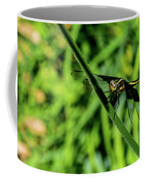 Odanata Coffee Mug featuring the photograph Resting Alert Dragonfly by Douglas Barnett
