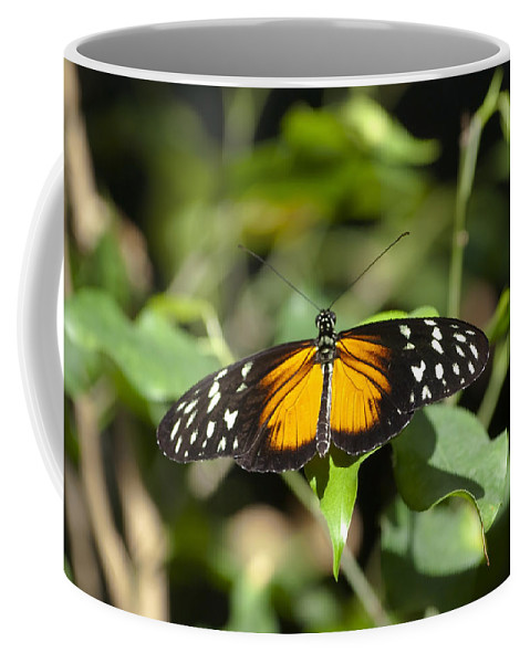 Butterfly Coffee Mug featuring the photograph Resting Butterfly by Sven Brogren