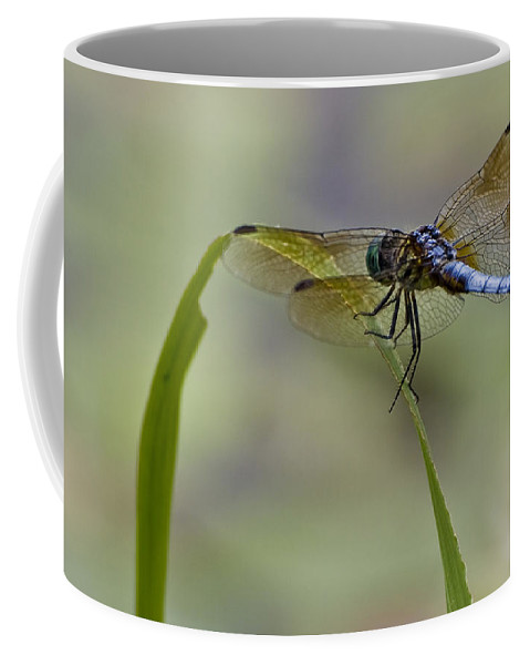 Insect Coffee Mug featuring the photograph Resting by Ches Black