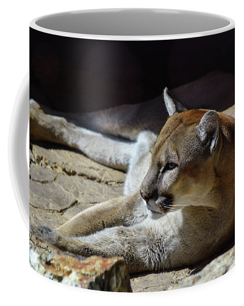 Cougar Coffee Mug featuring the photograph Resting Cougar by Chris Busch