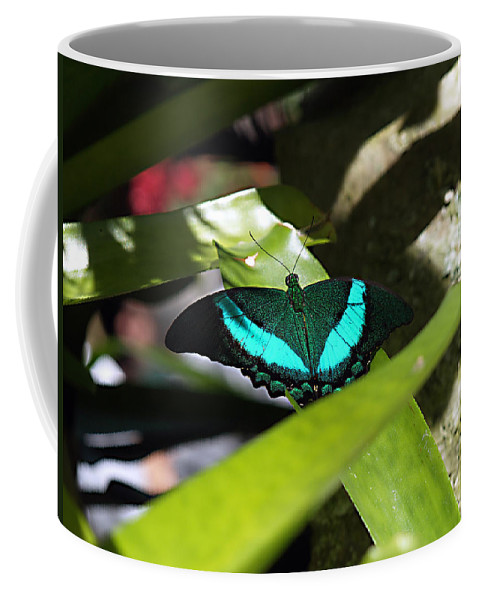 Bug Butterfly Coffee Mug featuring the photograph Resting In The Shadows by Bob Johnson
