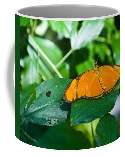 Butterfly Coffee Mug featuring the photograph Resting--tropical Butterfly by Douglas Barnett