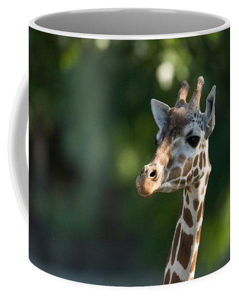 Photography Coffee Mug featuring the photograph Reticulated Giraffe At The Omaha Zoo by Joel Sartore