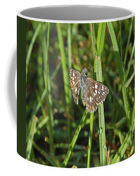 Butterfly Coffee Mug featuring the photograph Reversed Roadside Skipper by Kenneth Albin