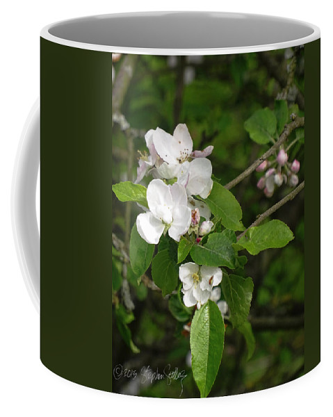 Pear Blossom Coffee Mug featuring the photograph Rhineland-palatinate Pear Blossoms by Stephen Settles