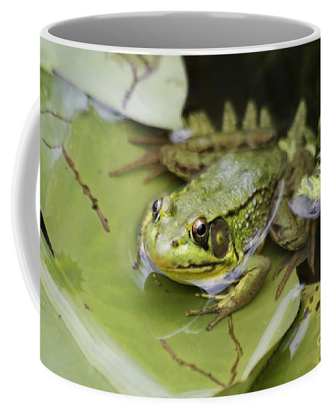 Frog Coffee Mug featuring the photograph Ribbet In The Pond by Deborah Benoit
