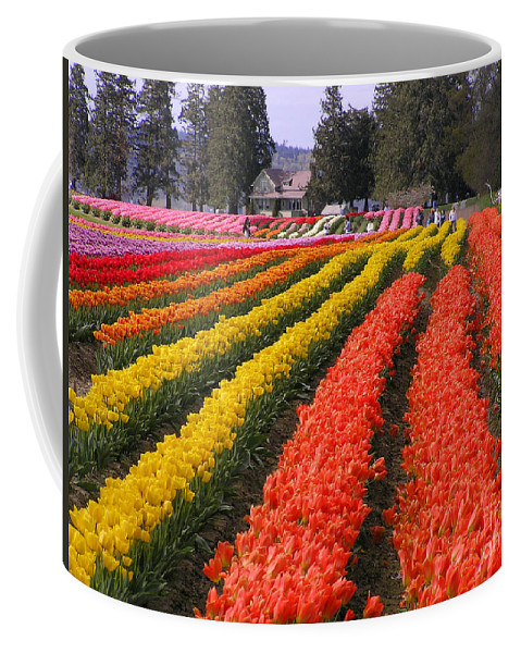 Tulips Coffee Mug featuring the photograph Ribbons Of Color by Louise Magno