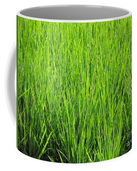 Rice Coffee Mug featuring the photograph Rice Plants by Yali Shi
