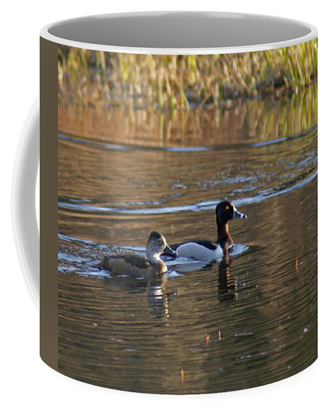 Duck Coffee Mug featuring the photograph Ring Necked Duck by Heather Coen