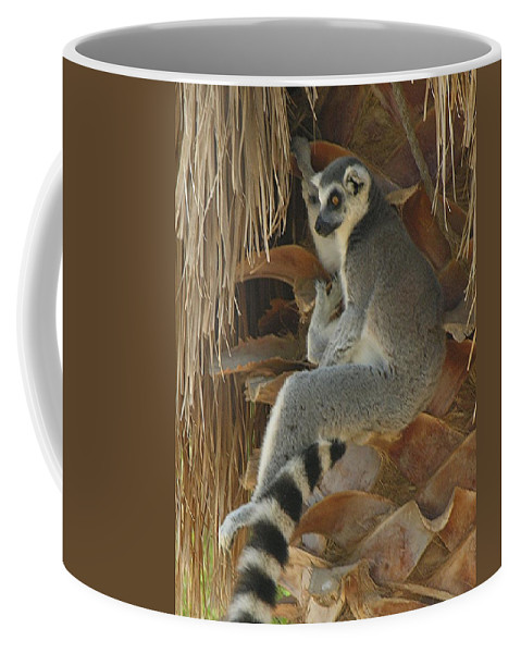 Ringtail Coffee Mug featuring the photograph Ring Tail by Diane Greco-Lesser