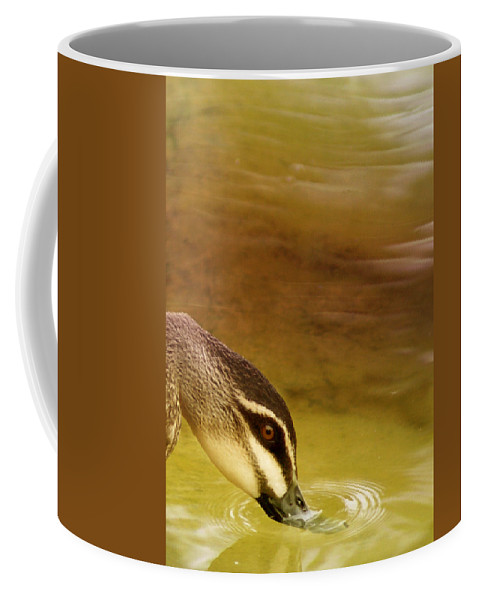 Animals Coffee Mug featuring the photograph Ripples by Holly Kempe