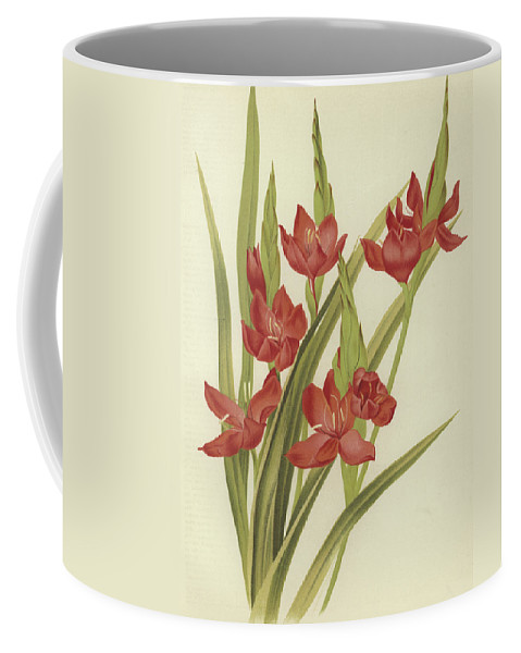 River Lily Coffee Mug featuring the painting River Lily Or Crimson Flag by English School