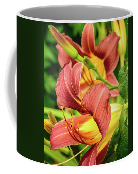 Sill Coffee Mug featuring the photograph Roadside Lily by Bill Schmitter