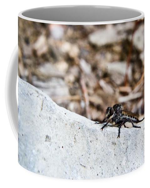 Stalking Coffee Mug featuring the photograph Robber Fly Stalking by Douglas Barnett