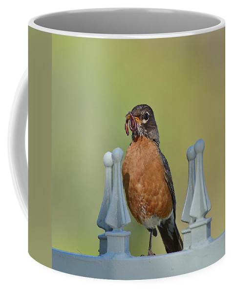 Linda Brody Coffee Mug featuring the photograph Robin With Worm II by Linda Brody