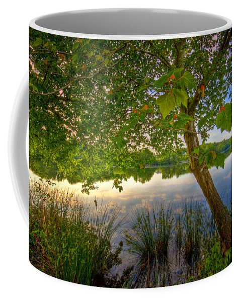 Nature Coffee Mug featuring the photograph Robinwood by Ches Black