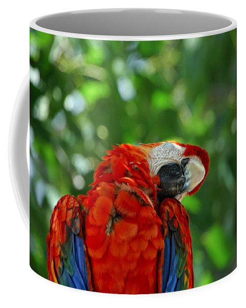 Parrot Coffee Mug featuring the photograph Rock A Bye Birdie by Donna Blackhall