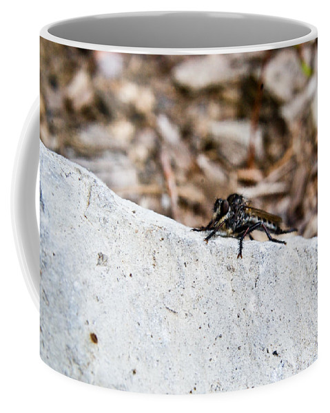 Rock Coffee Mug featuring the photograph Rock And Robber Fly by Douglas Barnett