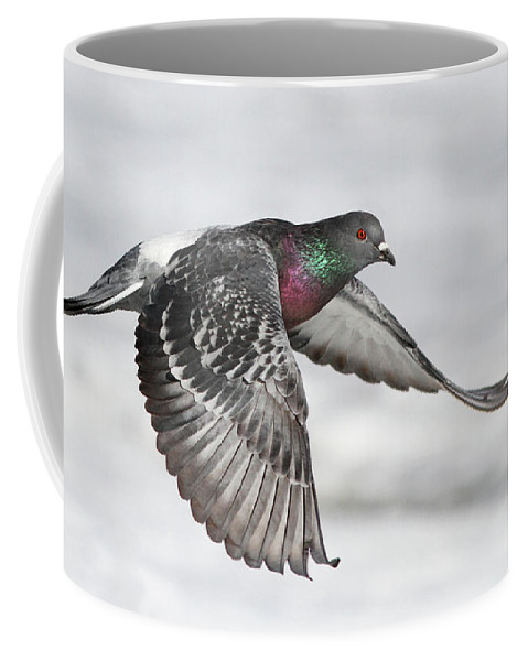 Angel Coffee Mug featuring the photograph Rock Dove In Flight by Mircea Costina Photography