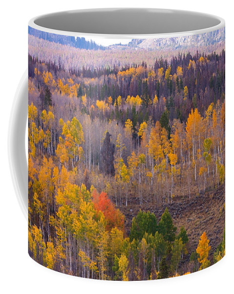 Trees Coffee Mug featuring the photograph Rocky Mountain Autumn View by James BO Insogna