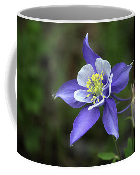 Flower Coffee Mug featuring the photograph Rocky Mountain Columbine 1 by Marie Leslie