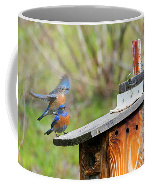 Bluebirds Coffee Mug featuring the photograph Rooftop Landing by Mike Dawson