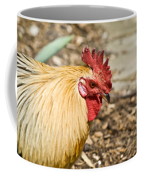 Rooster Coffee Mug featuring the photograph Rooster 1 by Douglas Barnett
