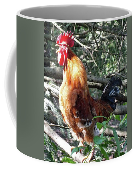 Rooster Coffee Mug featuring the photograph Rooster Crowing by Cindy Treger