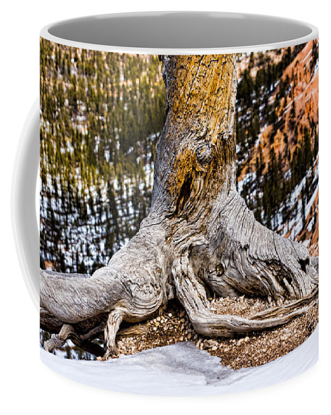 Landscape Coffee Mug featuring the photograph Roots Gripping The Edge by Christopher Holmes
