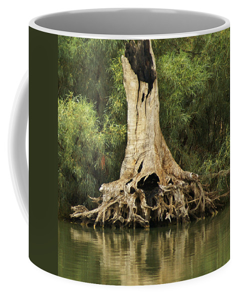 Nature Coffee Mug featuring the photograph Roots Of Wisdom by Holly Kempe