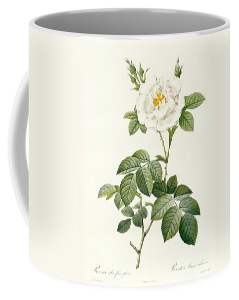 Rosa Coffee Mug featuring the drawing Rosa Alba Flore Pleno by Pierre Joseph Redoute